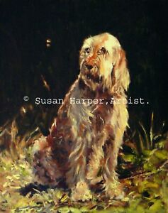 SALE Italian Spinone Signed Dog Print by Susan Harper Unmounted
