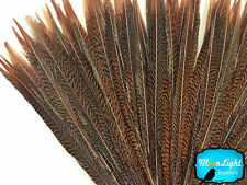 "10 Pieces - 20-25"" Natural Long Golden Pheasant Tail Feathers"