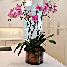 50 Seed Exotic Tropical Orchid Flower Home Garden Easy Grow Plant Grain Rare