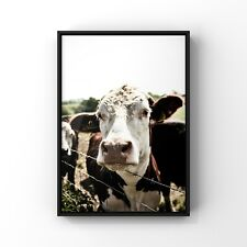 Shropshire Cow. Professionally framed contemporary print. Original photograph.