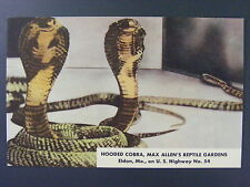 Eldon Missouri Max Allen's Reptile Gardens Hooded Cobra Vintage Postcard 1950s