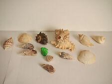 ASSORTED Bulk Sea Shells Beach Shell Table Decor Craft LOT