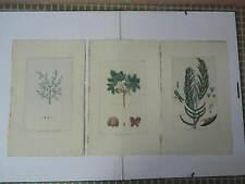 BUCHOZ Le grand jardin de  l'univers 1785-1791 49 x 30 cm 3 planches 70+79+80