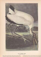 """1942 Vintage AUDUBON BIRDS #216 """"WOOD IBIS"""" LOVELY Color Art Plate Lithograph"""