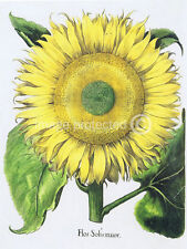 Single Large Sunflower Basilius Besler Vintage Botanical Poster 18x24