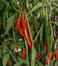 Sweet Cayenne Pepper Seeds 25 Sweet Pepper Seeds
