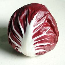 CHICORY Radicchio Red Verona Heirloom Seeds (V 450)