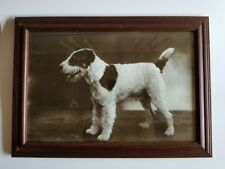 Wire Fox Terrier Photograph Art Print Photo Framed Show Dog Puppy Portrait 12x17