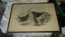 H.C. Richter & John Gould 1850-1853 Original hand colored Lithograph Birds Asia