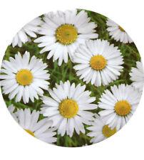 Wachstuch und Tischdecken mit Natur- & Blumenmuster