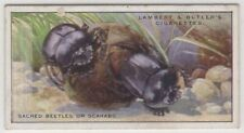 Sacred Scarab Beetle Insect 85+ Y/O Trade Ad Card