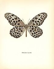 "1963 Vintage PROCHAZKA BUTTERFLY ""TREE NYMPH"" GORGEOUS COLOR offset Lithograph"