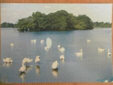 POSTCARD YORKSHIRE HORNSEA - SWAN ISLAND - SWANS ENJOYING THE SUNSHINE