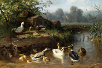 Art Hd Print Ducks in the Brook Landscape Oil painting Printed on canvas P970