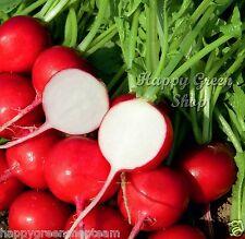 Semillas De Cinta 5 Metros-Rabino Cherry 250 Semillas-Raphanus Sativus vegetales