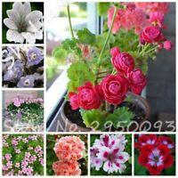 50 pcs Dwarf Geranium Seed Bonsai Fresh Flower Pelargonium Peltatum Seeds DIY Ho