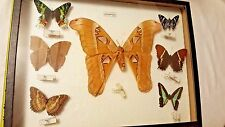 Lot of 7 real framed mounted lepidoptera  butterflies lot in 12 x 16 display