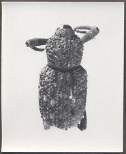 Unusual Vintage Photo Burmeisteri Beetle Bug Specimen Entomology 258135