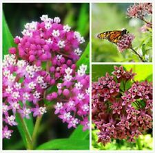 Milkweed-Butterfly Perennial-buy 2 GET 1 free-the-Monarch-butterfly!  50 seeds