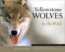 Yellowstone Wolves in the Wild: By James C Halfpenny