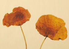 Green Floral Crafts   Sponge Mushrooms   Pack of 6   Honey Mango
