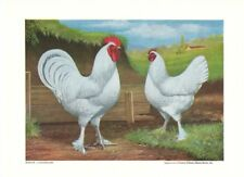 White Langshans by L A Stahmer 1928 Poultry Tribune Supplement Reprint