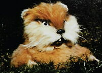 138782 THE GOPHER FROM CADDYSHACK Decor Wall Print POSTER