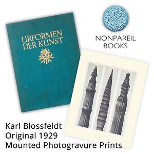 Karl Blossfeldt (Urformen der Kunst) Original 1929 Mounted Photogravure Prints