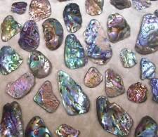 BWT- 6 Medium Top Drilled New Zealand Paua/Abalone Shells- Jewelry- Scrapbook