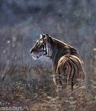 Denis MAYER Siberian Tiger LTD Giclee Canvas LTD art Signed & Numbered
