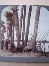 Stereo View Stereo Card - Egypt