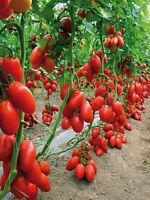 Tomato seeds Siberian Trio  from Ukraine