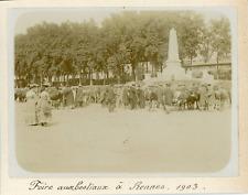France, Foire aux bestiaux à Rennes 1903, Vintage citrate print Vintage citrate