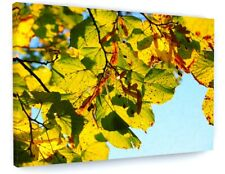 STUNNING AUTUMN WOODLAND TREE LEAVES CANVAS PICTURE PRINT CHUNKY FRAME #4140