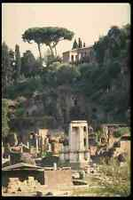 149009 A Roman Pine On Top Of Palentine Hill With The Forum A4 Photo Print