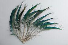 "500 Pcs PEACOCK SWORDS Natural Tail Feathers 10-12"" Pads/Art/Craft/Halloween/Hat"