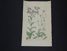 Sir John Hill, Botanical, The Vegetable System 1761-1775 Wooll Thistle #11