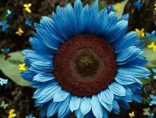 Usa Seller 50 Bright Blue Sunflower Seeds Plants Garden Planting 50 Pack