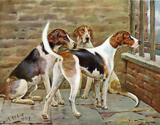 FOXHOUND CHARMING DOG GREETINGS NOTE CARD THREE DOGS IN KENNEL