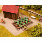 NOCH White Cabbages 16 Plants HO/OO Gauge 13217
