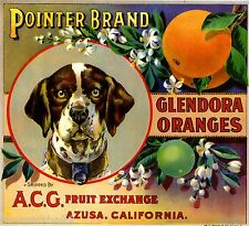 Glendora German Pointer Dog #2 Orange Citrus Fruit Crate Label Art Print