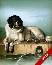 SHEEP DOG RESTING ON A SEASIDE DOCK PET DOG ART PAINTING PRINT ON REAL CANVAS