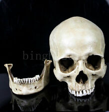 11X7X8.5cm Small Human Skull Replica Resin Model Medical Realistic Model