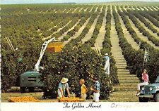 BG21046 the golden harvest florida orange grove types usa