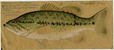 LEON PRAY Signed ORIGINAL LARGEMOUTH BASS #2 Color Fish Drawing 4 x 9