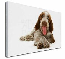 More details for italian spinone dog x-large 30