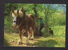 Prés de ESTIALESCQ (64) AGRICULTEUR & ATTELAGE de CHEVAL , Descente des FOUGERES
