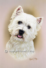 West Highland White Terrier Print by Robert J. May