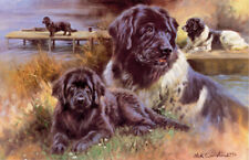 More details for newfoundland newfi black dog fine art limited edition print - by mick cawston