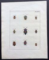 1782 Dru DRURY Vol.3 Pl 46 HEMIPTERA PENTATOMID BUGS HandColr Copper Plate XLVI